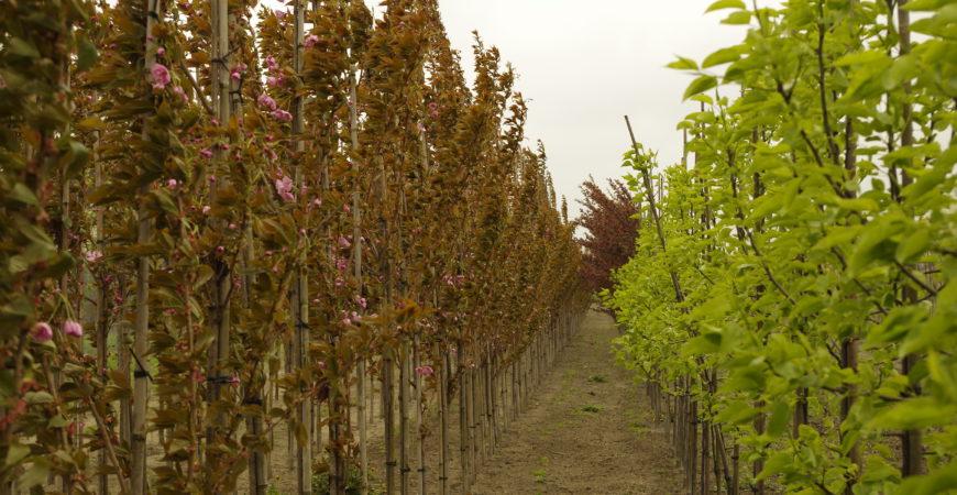 Drzewa i krzewy liściaste – z bryłą korzeniową