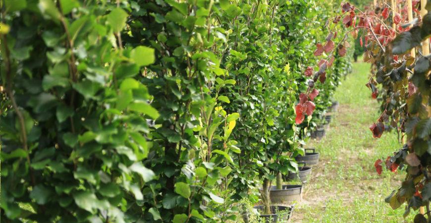 Drzewa i krzewy owocowe i ozdobne w pojemniku